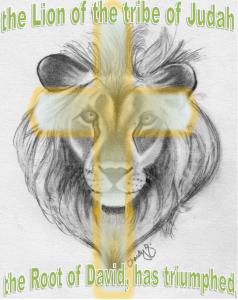 lion5